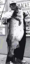 World Striped Bass Record